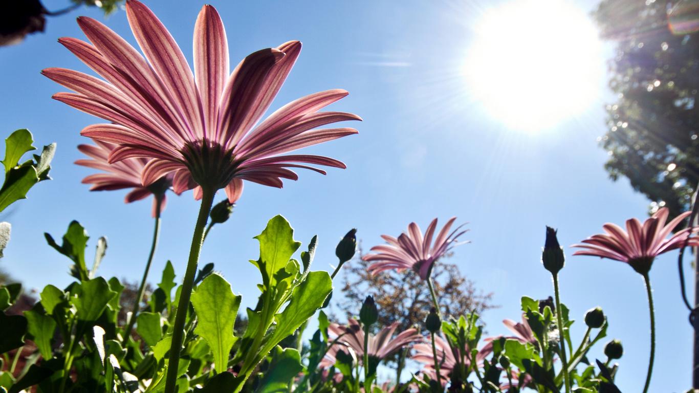Розовый цветы природа солнце небо