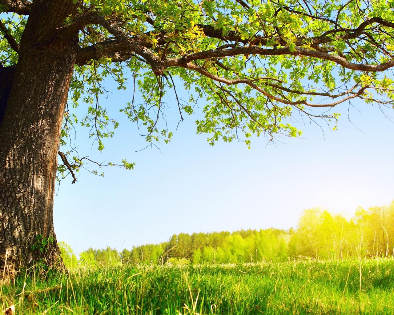 Картинки солнце, лето, природа, листва, дерево, Under the tree ...