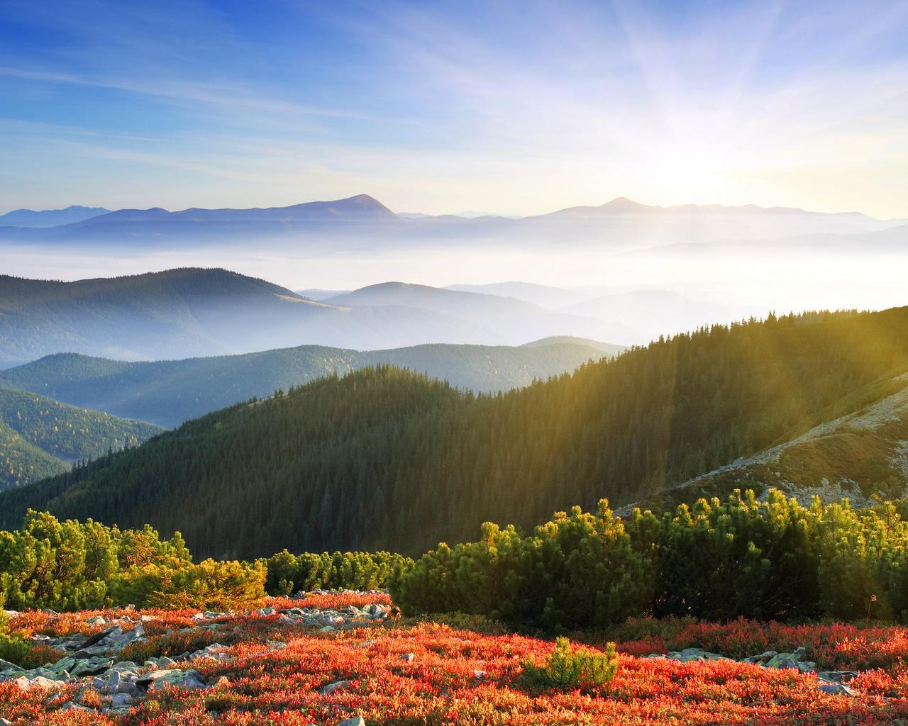 Утро лучи солнца