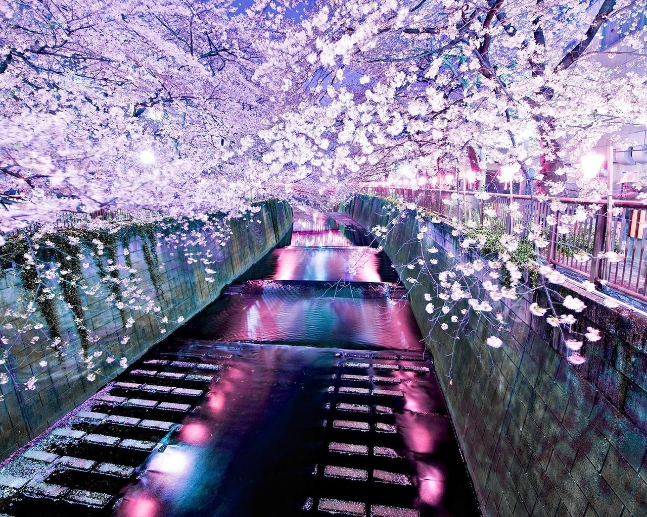 На рабочий стол обои цветение сакуры 3