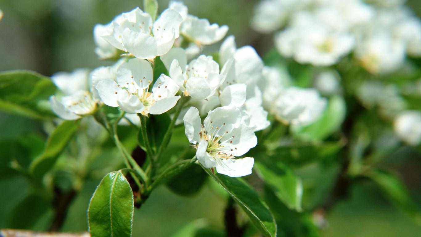 Весенние цветы весна цветы красота