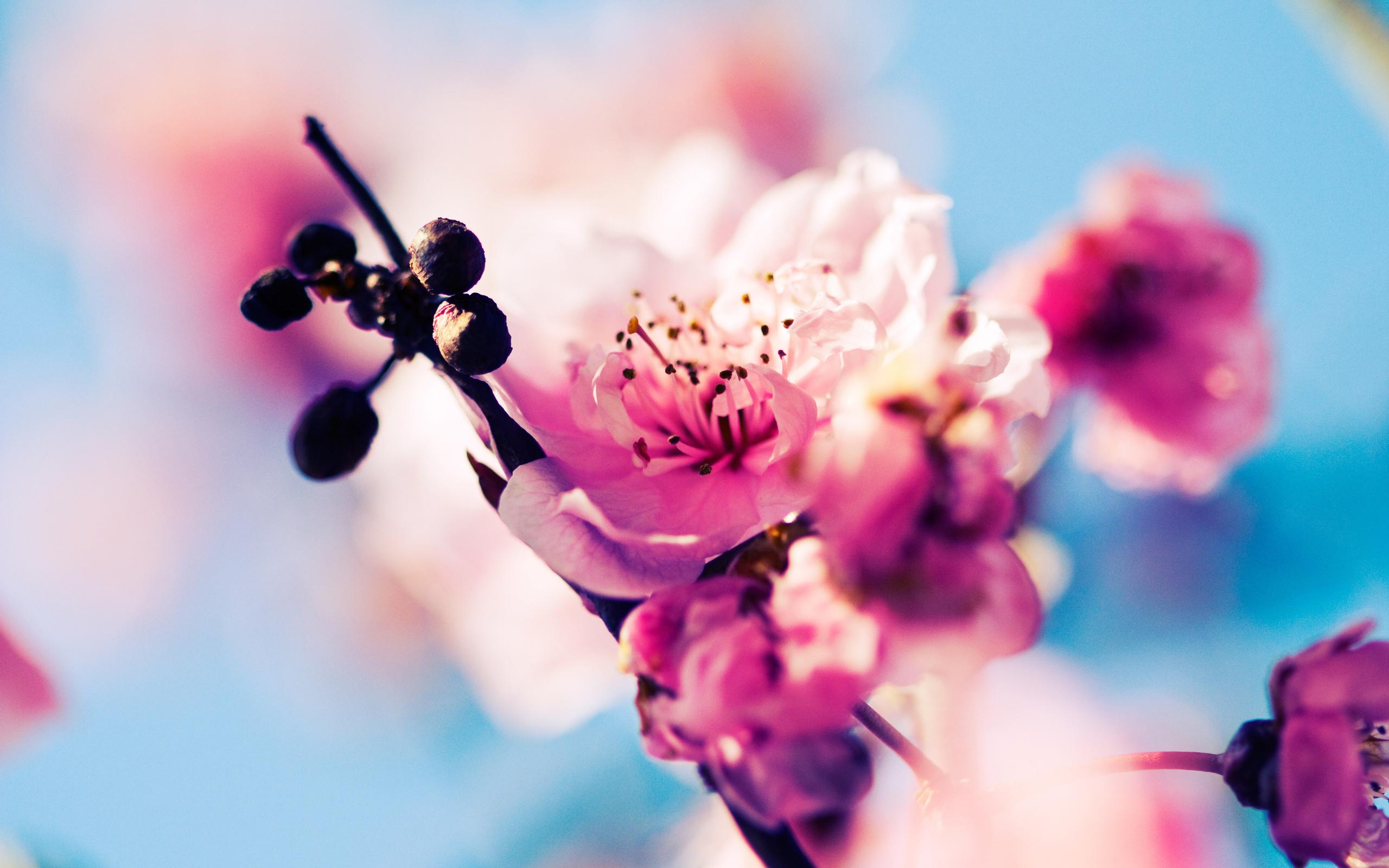 обои цветы: