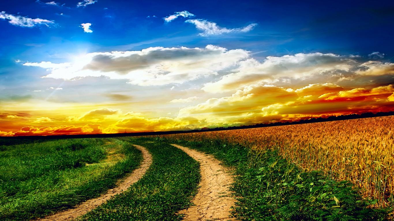 Поле небо трава закат разрешение