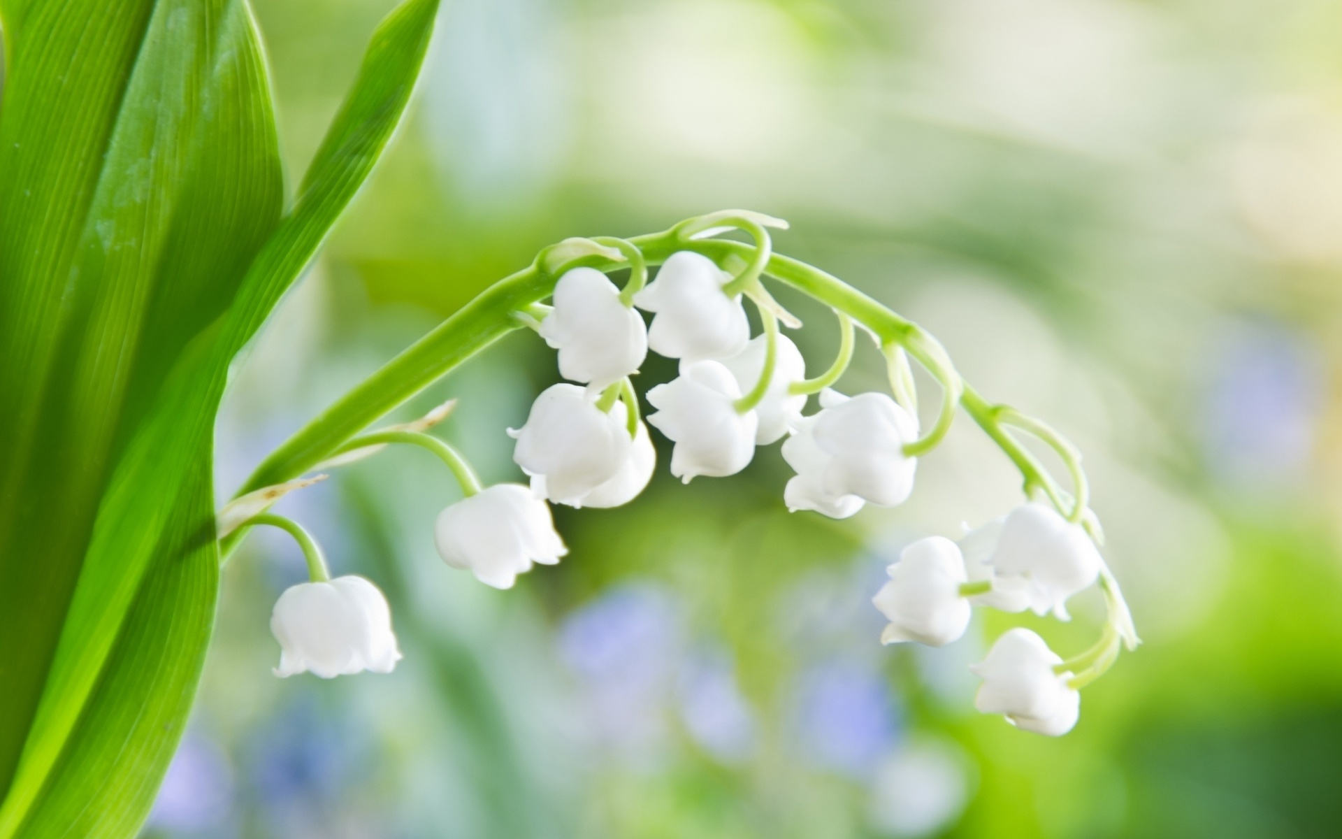 весенние цветы фото: