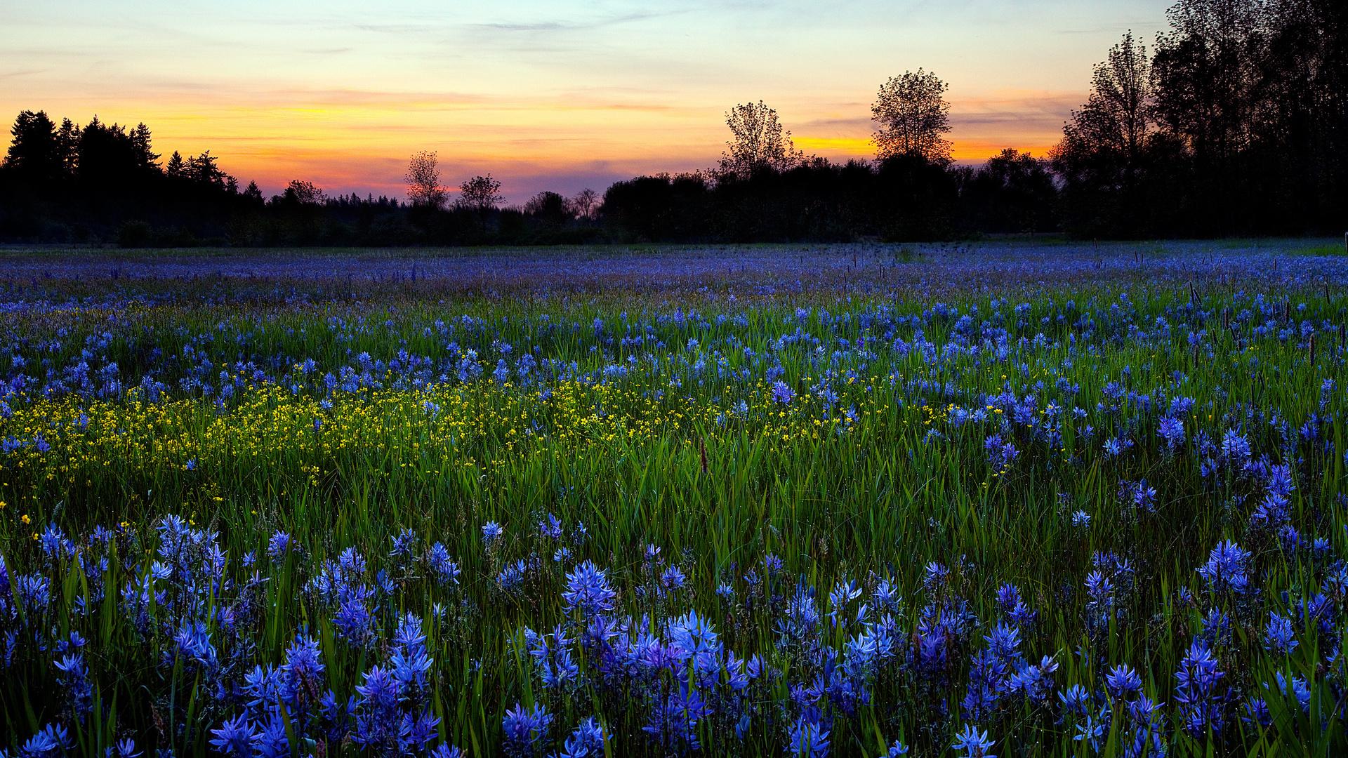 Картинки утро роса цветы поле