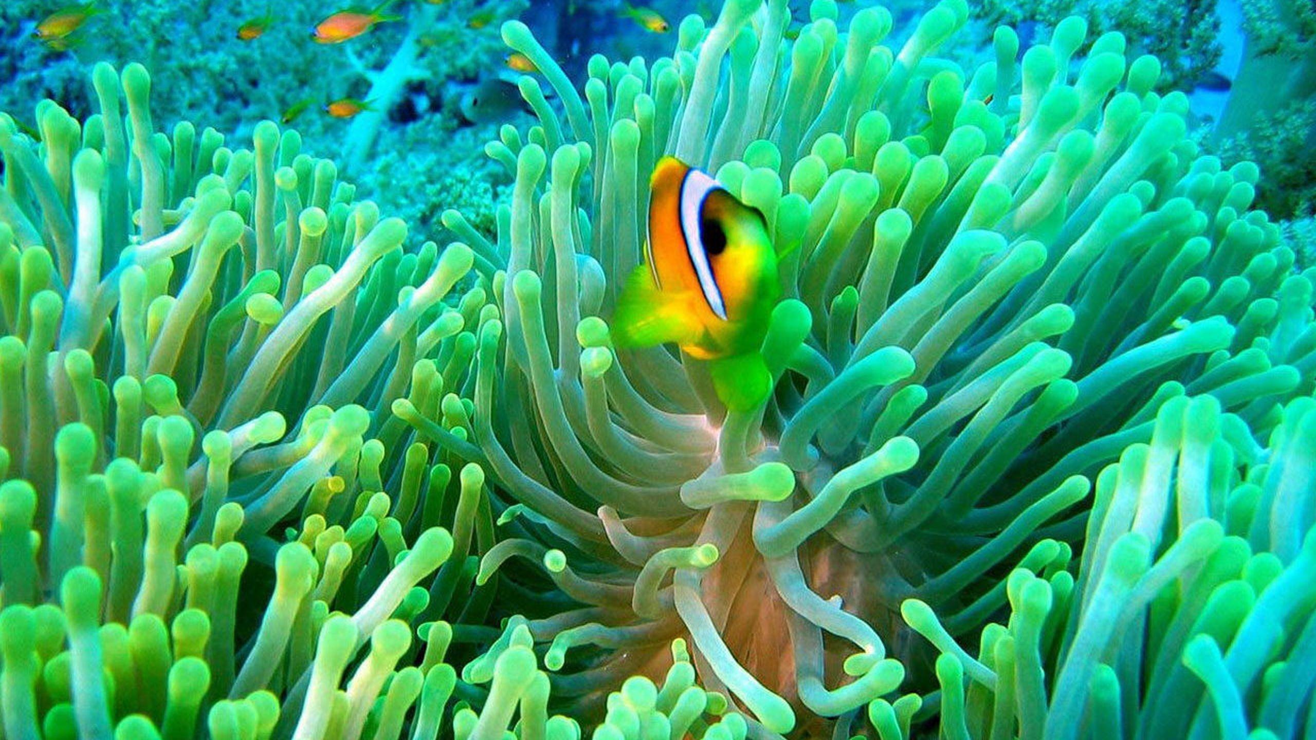 живой аквариум обои для рабочего стола скачать бесплатно