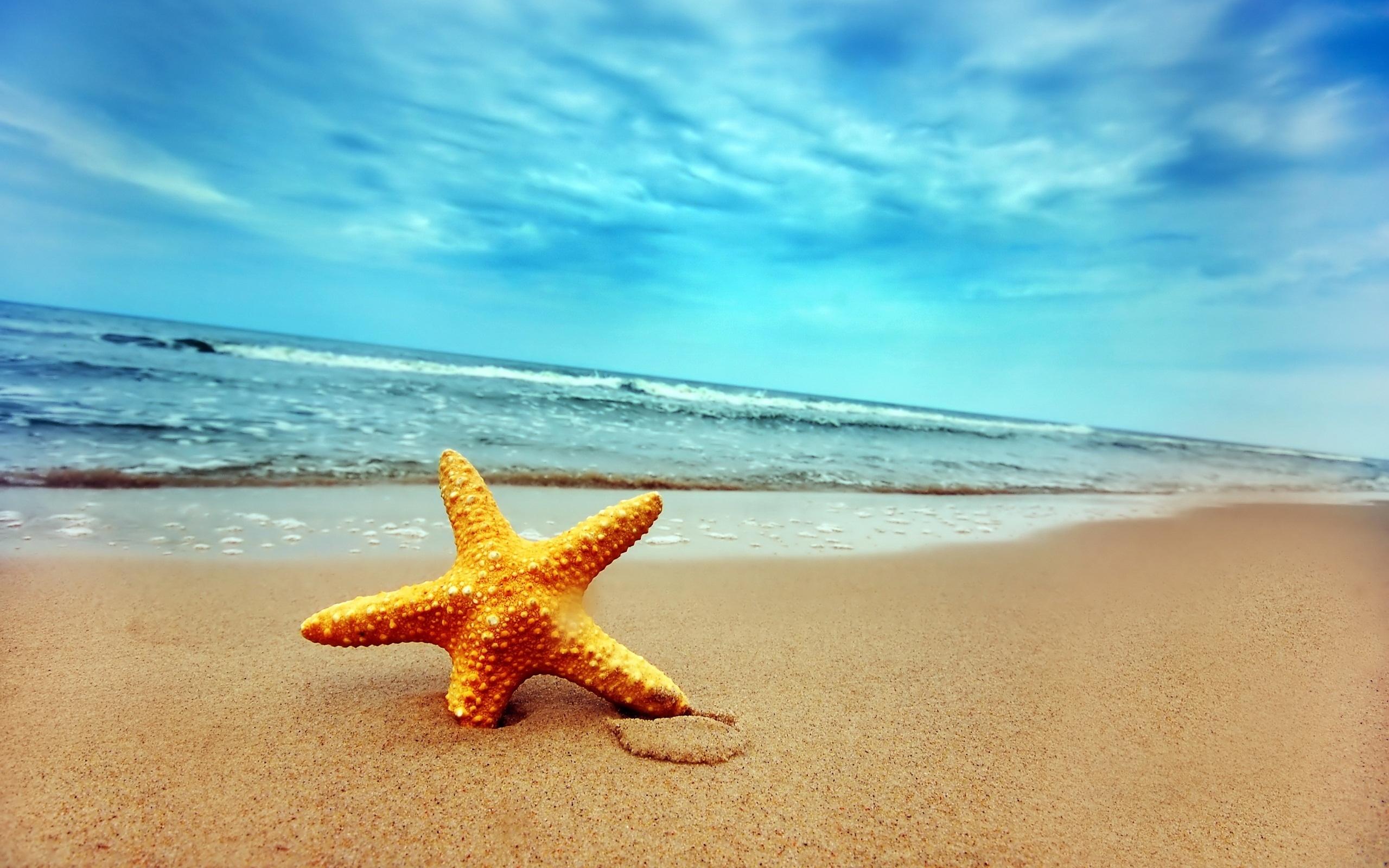 Стола обои море морская звезда отдых