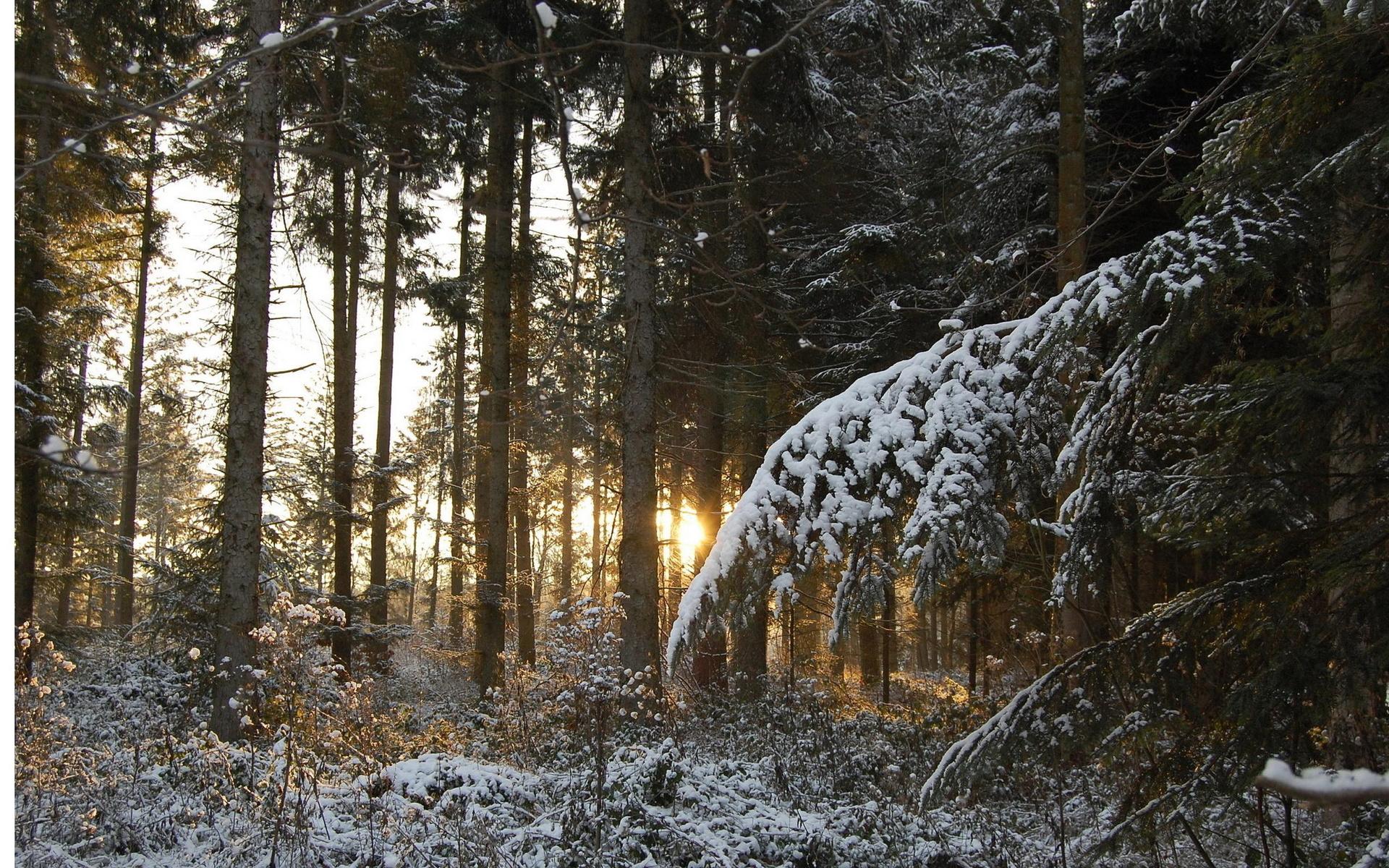Лес деревья ветки зима закат снег