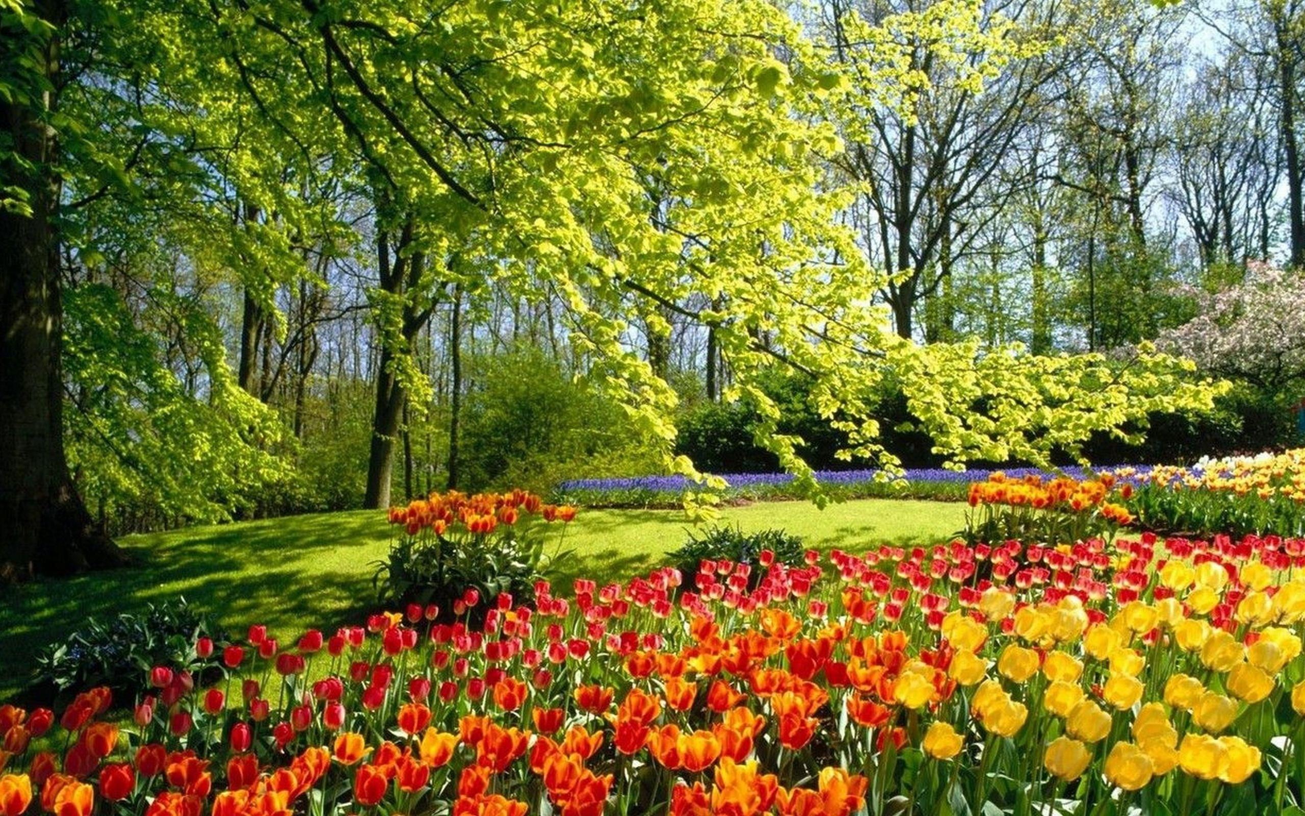 обои весна природа: