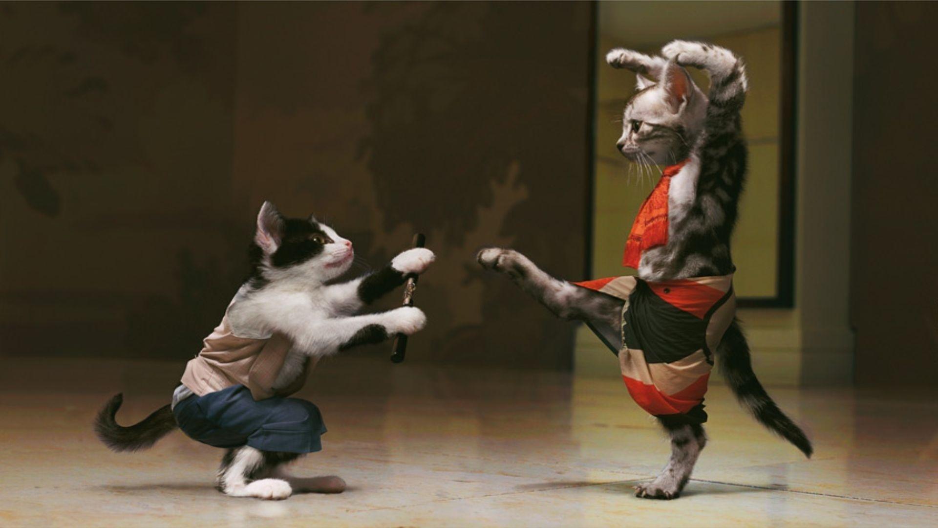 Теги: боевое, кунг-фу, котов. Обои на различные темы, качественные