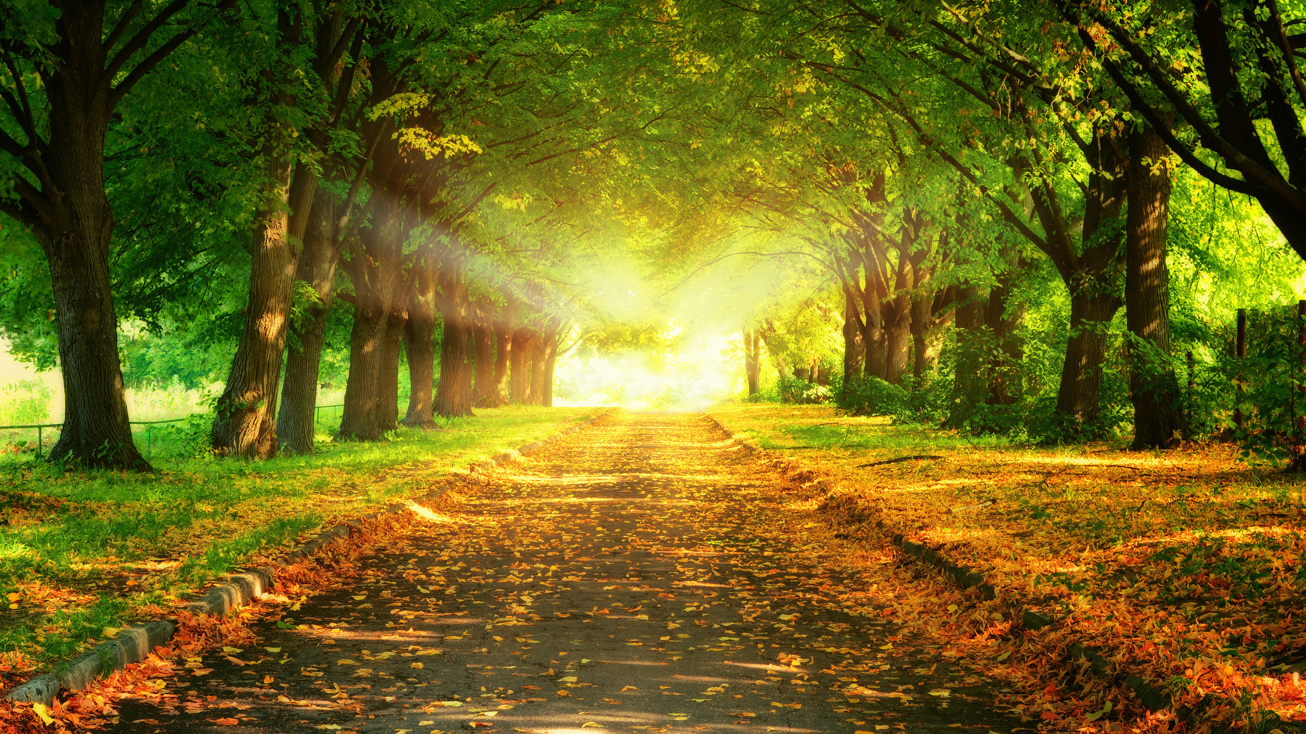 Nature beautiful trees majestic leaves landscape road sunset picture