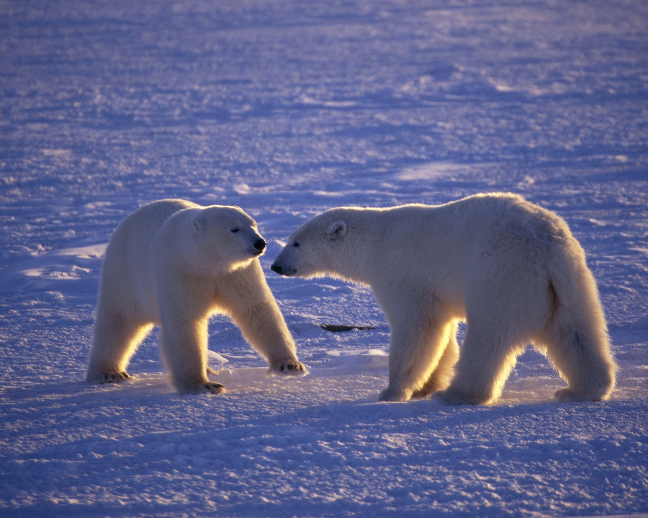 North pole animals pictures Arctic Animal Printouts - m