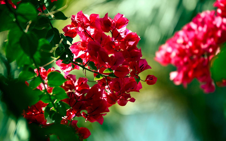 Цветы красные красивые