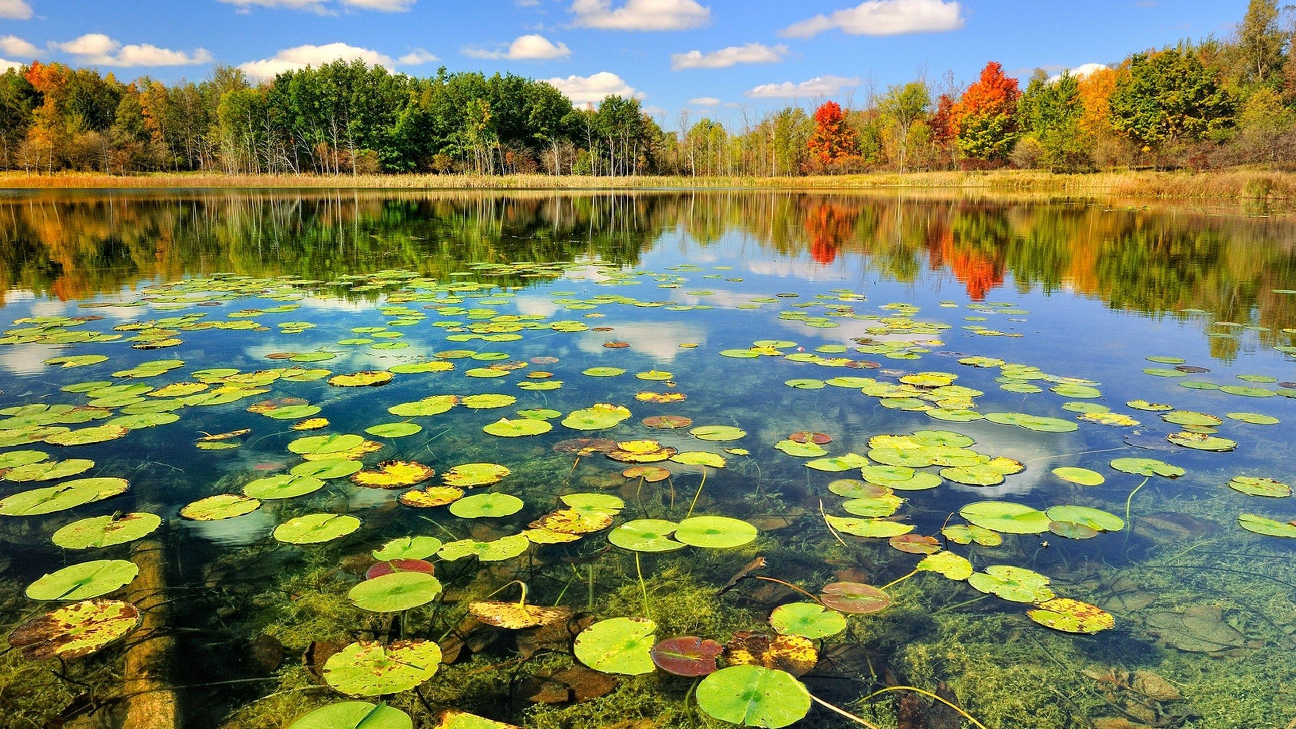 Природа осень деревья пейзаж река