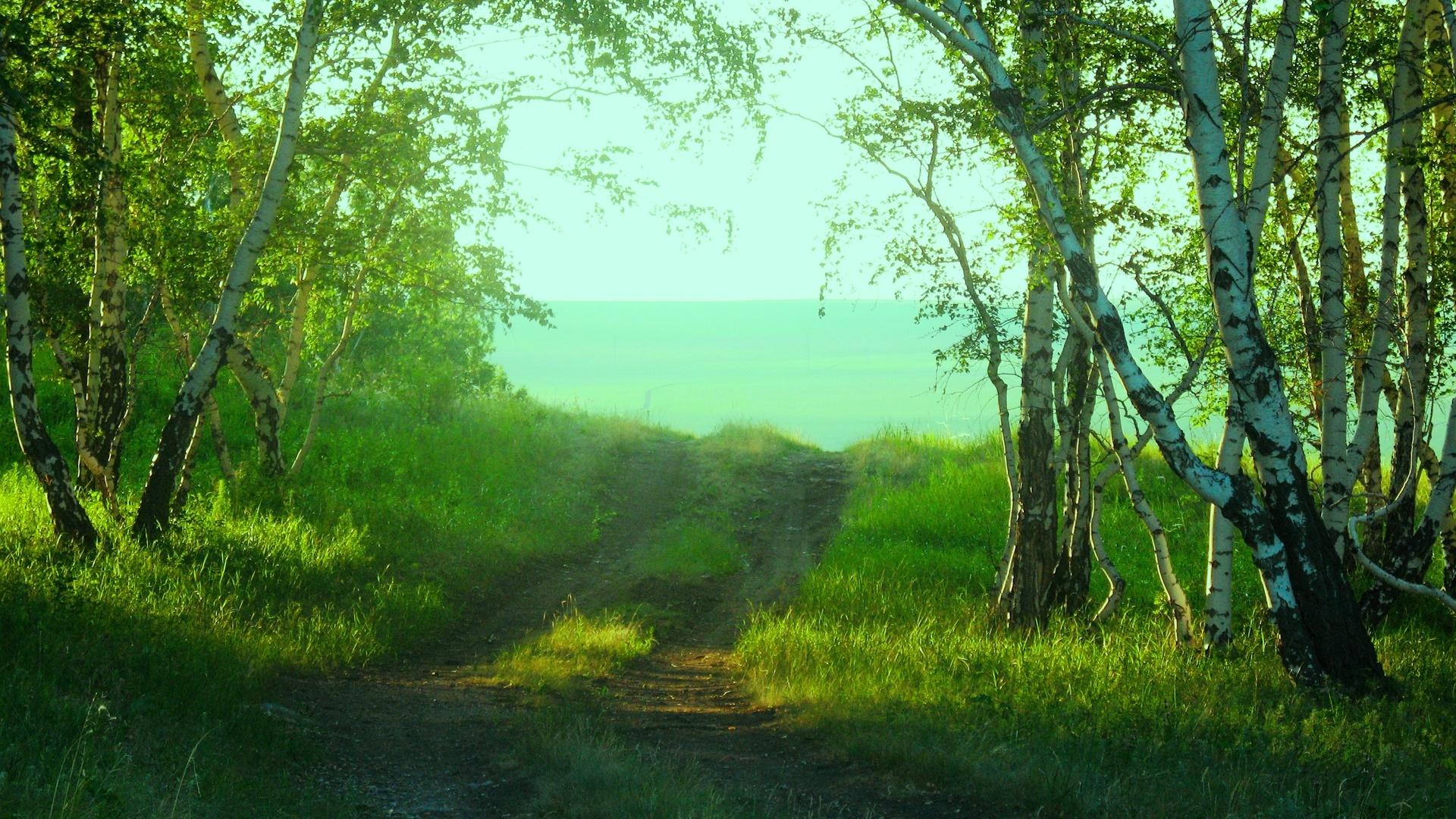 Картинки природа лето