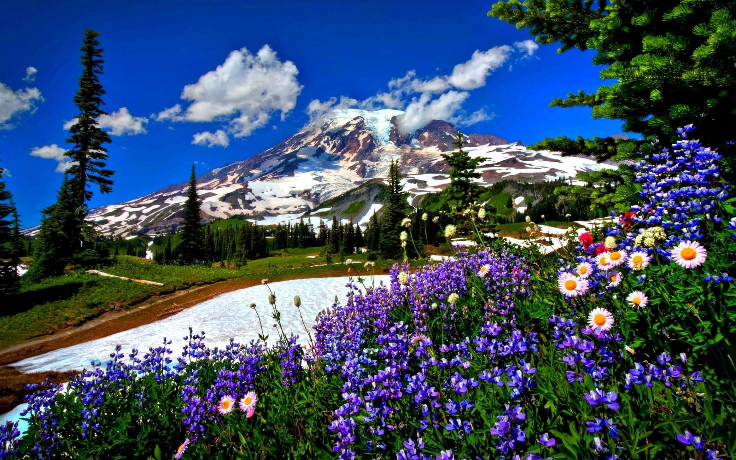 Обои природа пейзаж дорога цветы