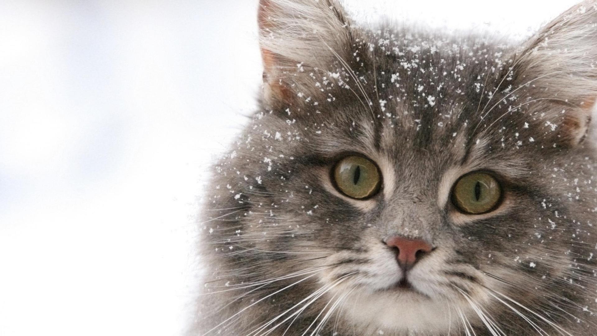Киска киця кот кошка кисуля зима