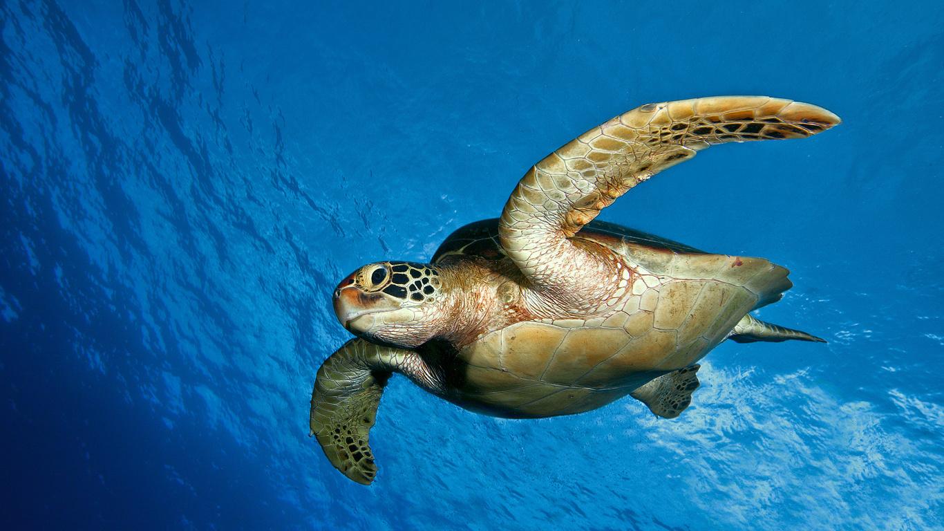 Вода океан черепаха подводный мир