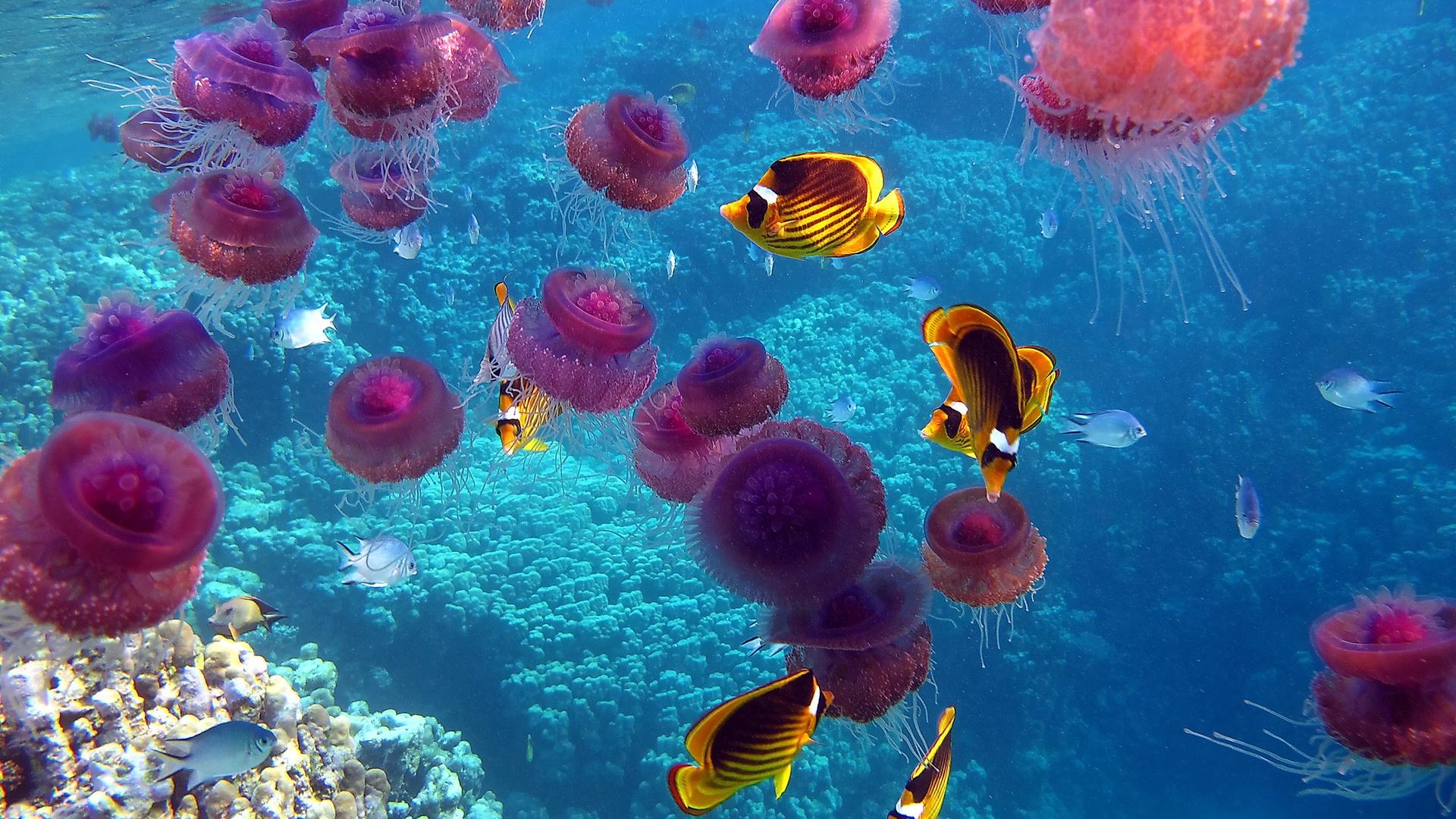 Стола обои море океан подводный мир