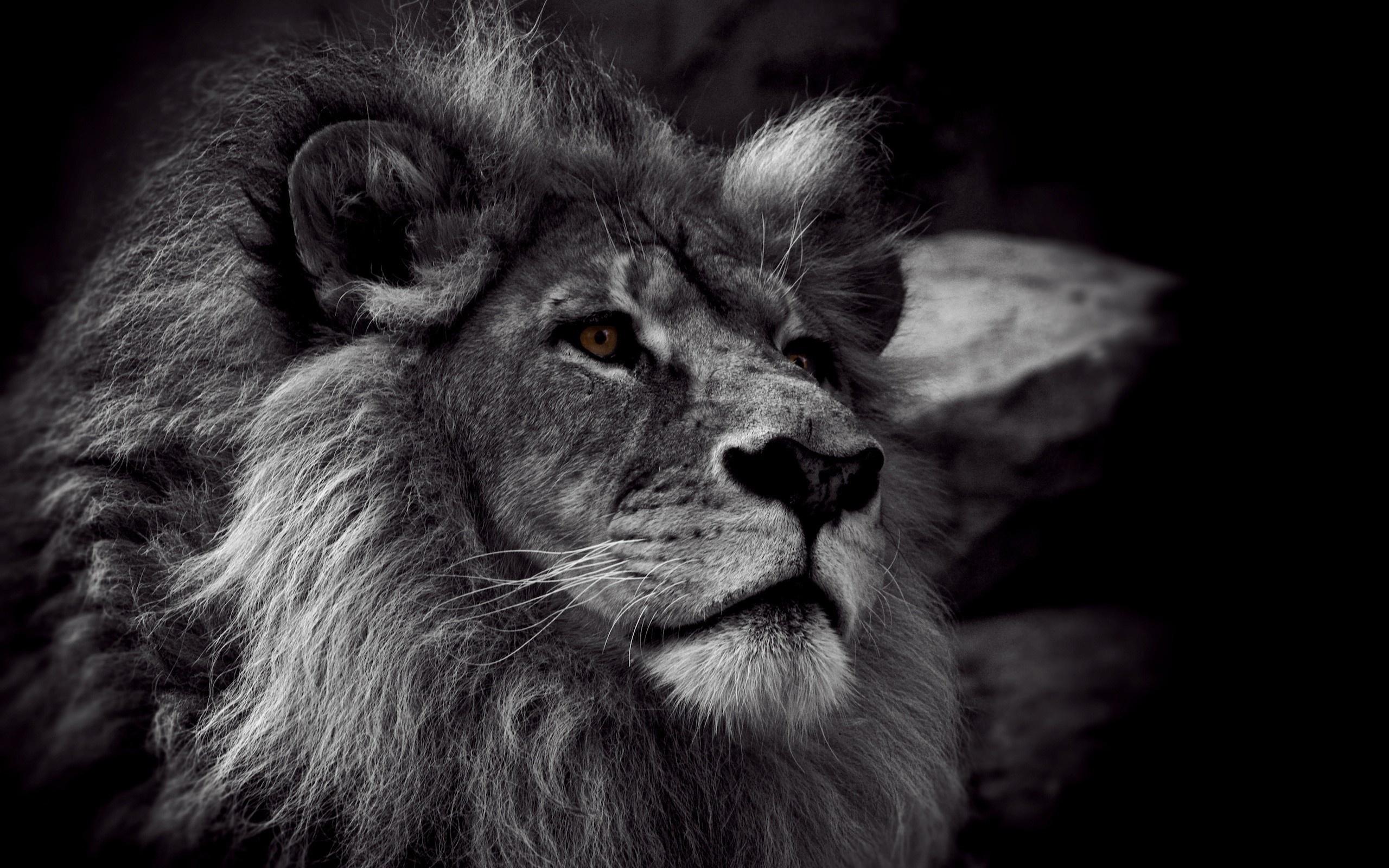 король лев 1 1080