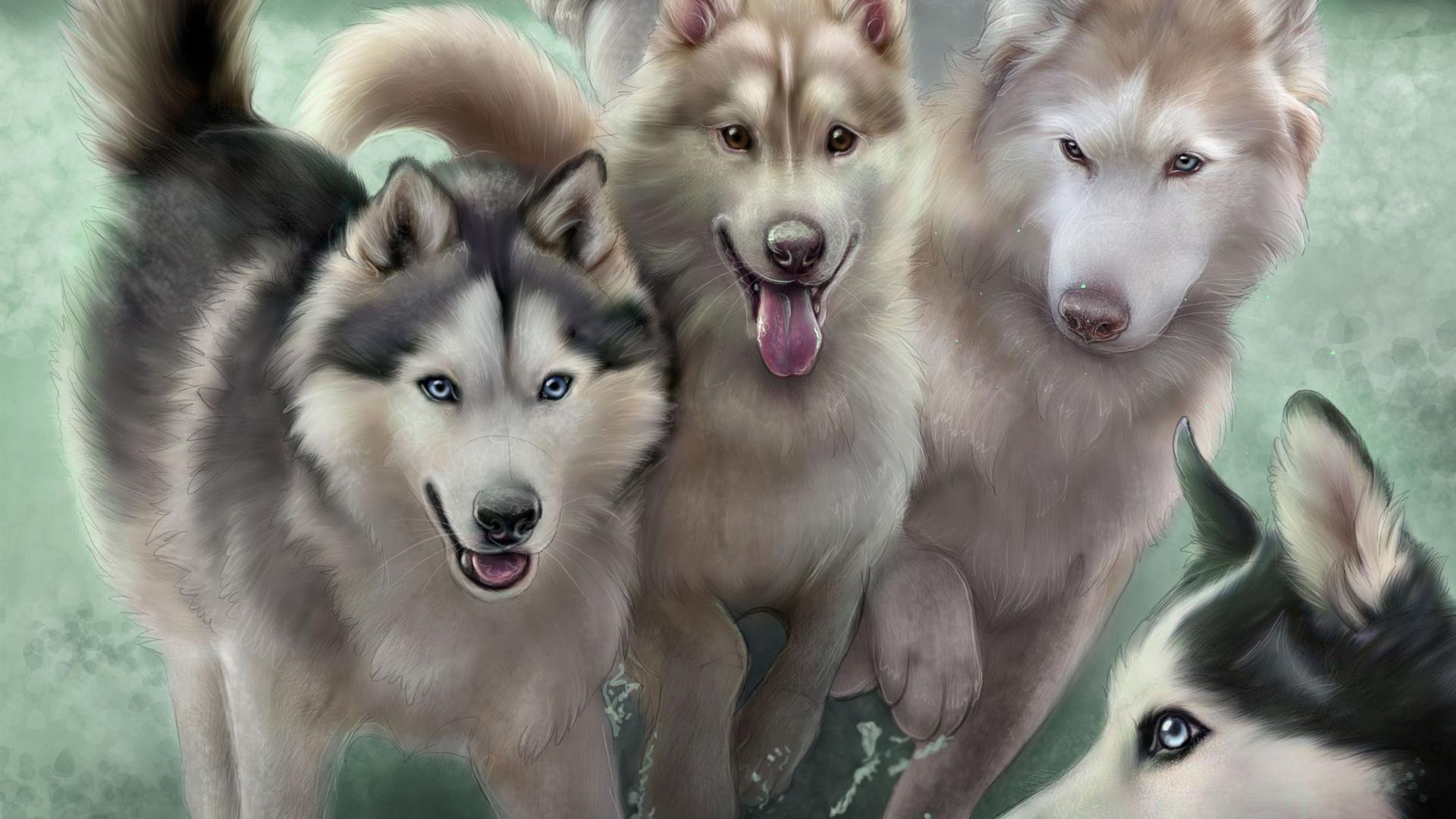 лайки собаки фотки