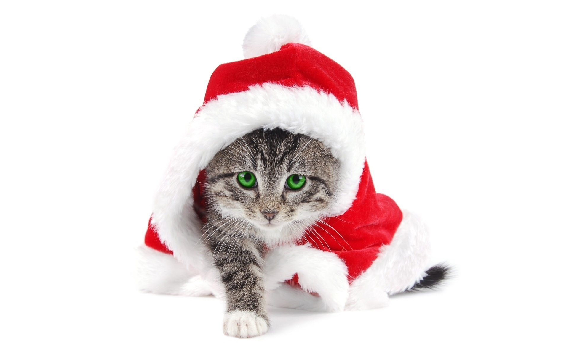 Новогодний сценарий год кота