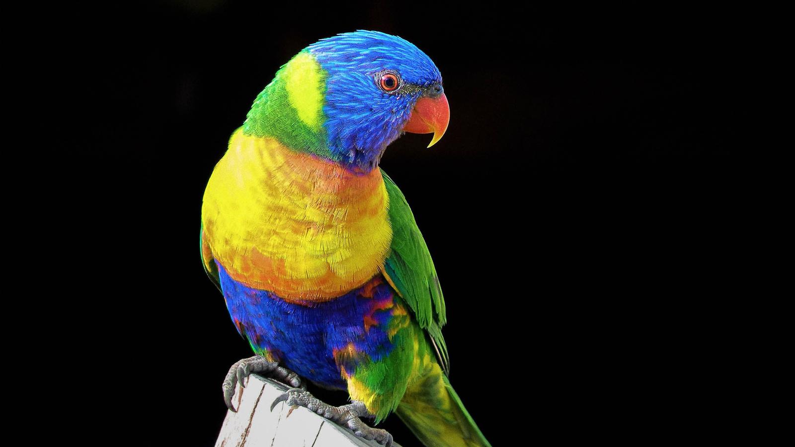 Красивые картинки на рабочий стол природа птицы