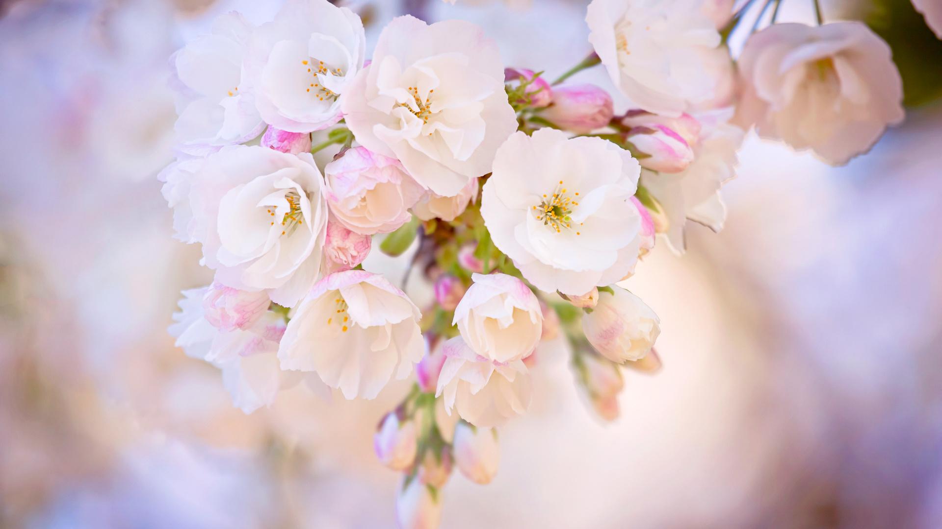 Красивые картинки на рабочий стол весна 35 фото