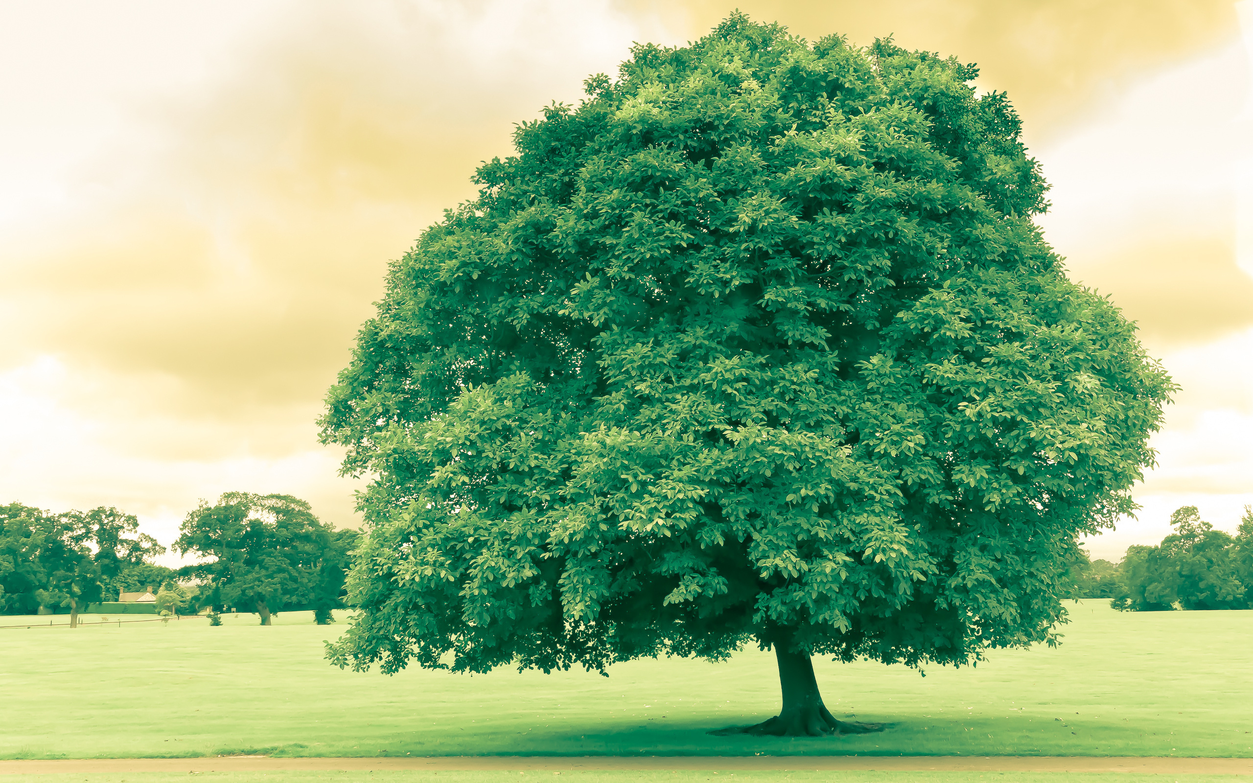 Free high resolution pc desktop background pictures,  753b  50cf, 5199  771f, 80cc  666f, 984c  6750, 7d20  6750 - spreading tree images, tree wallpapers