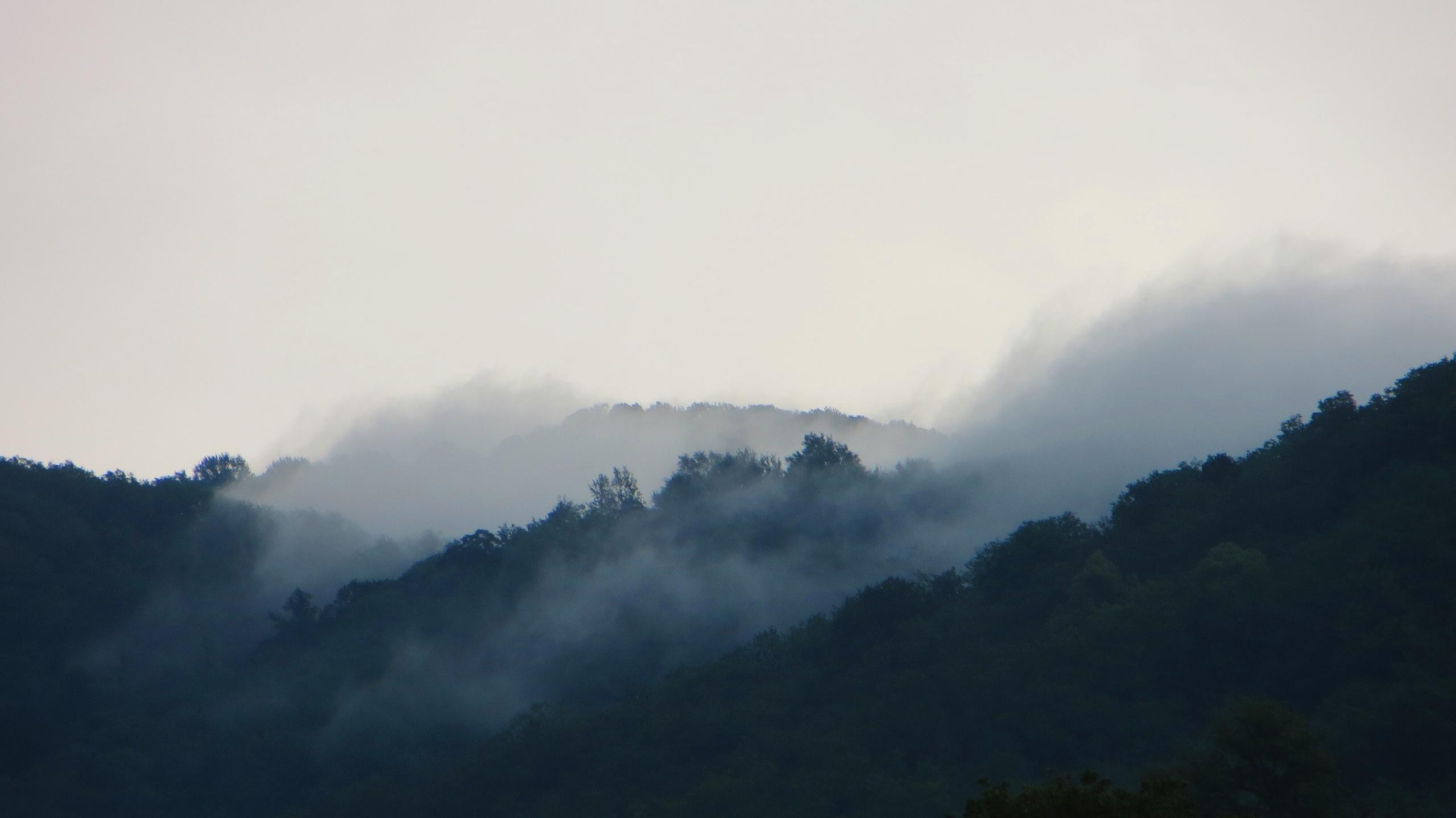 обои осень туман