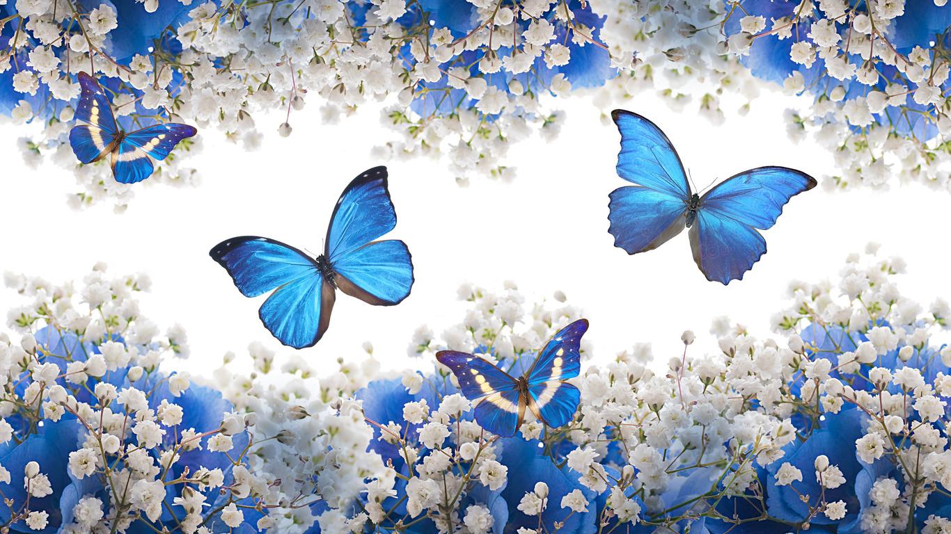 http://www.nastol.com.ua/pic/201504/1366x768/nastol.com.ua-135524.jpg