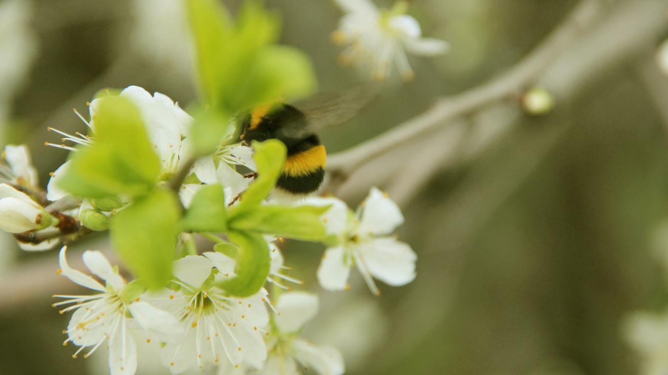 заставка белая весна