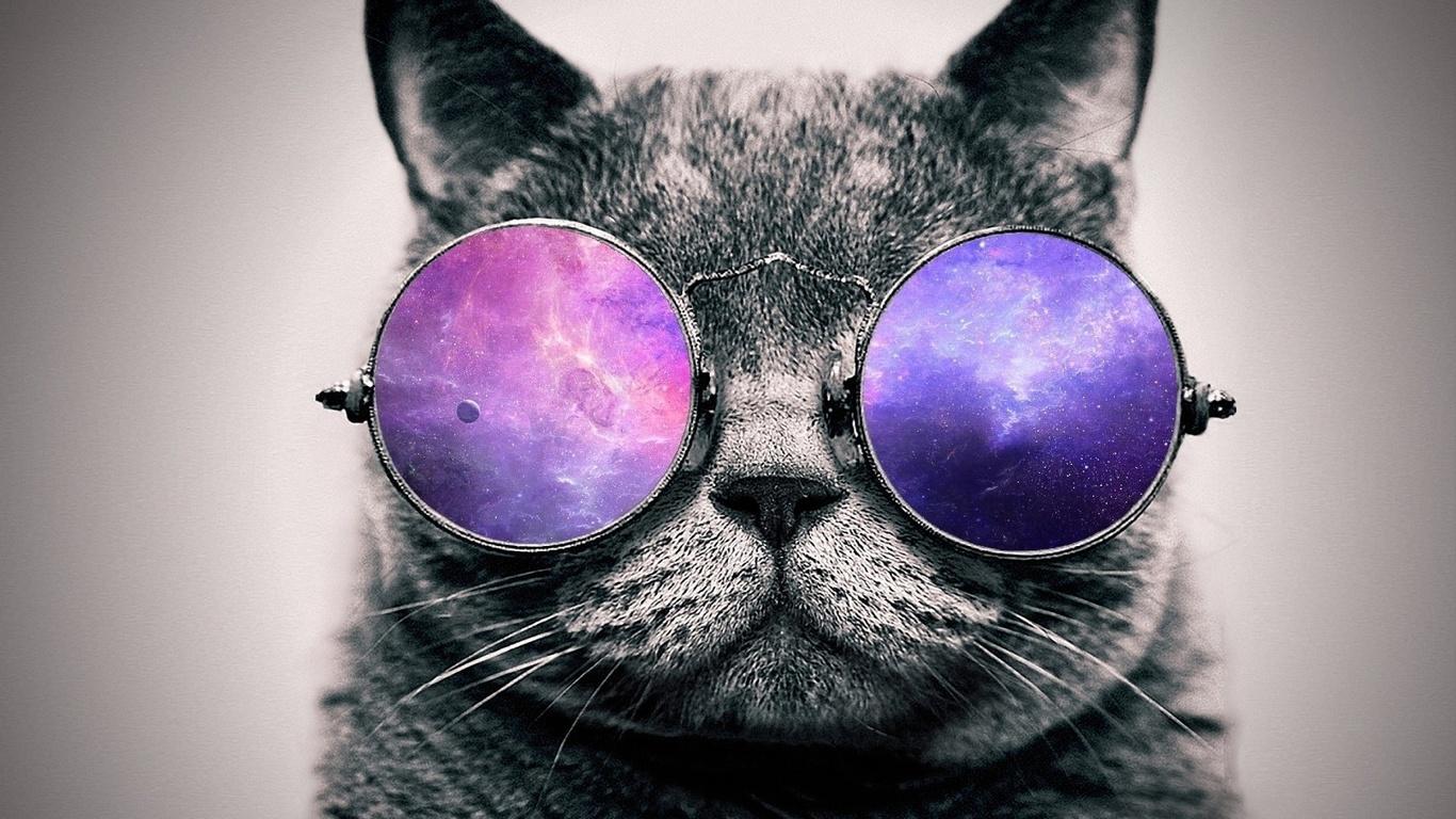 Фото котов на аву