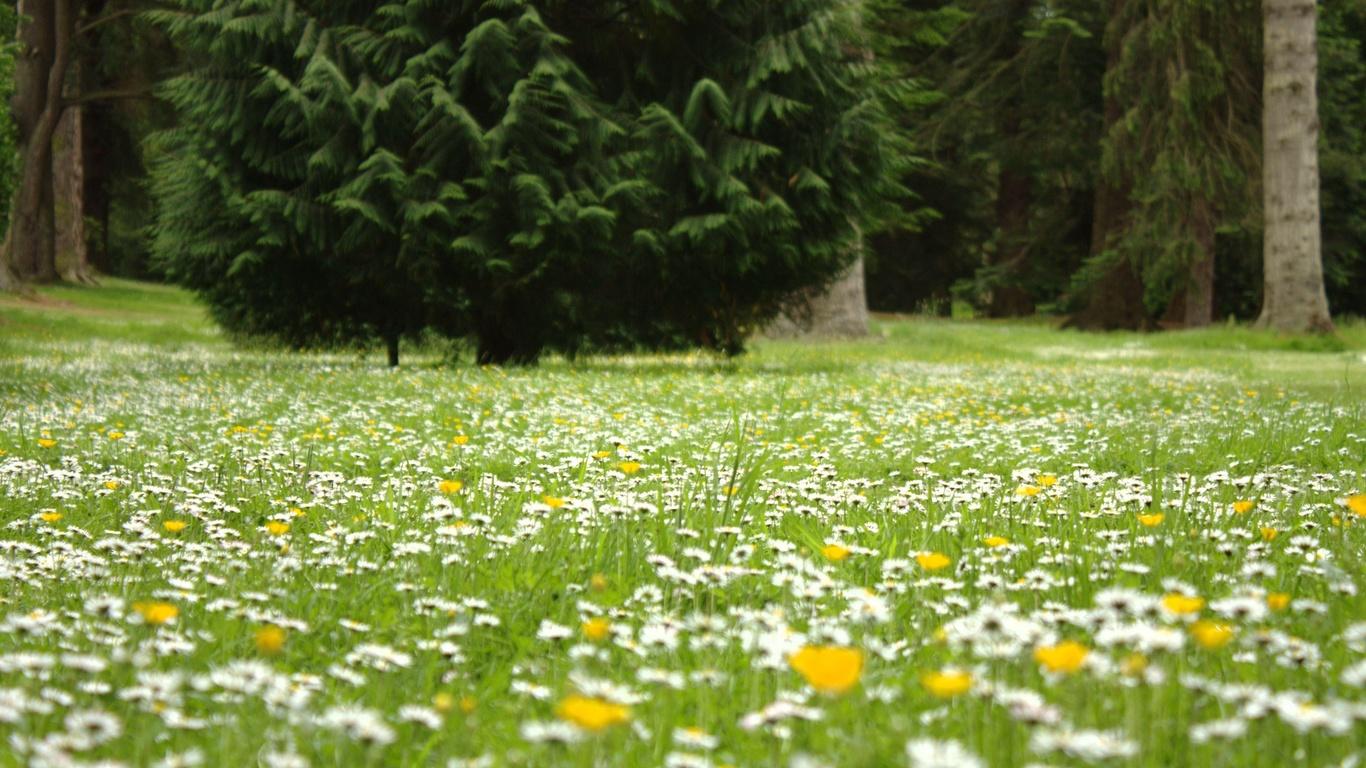 Цветы лес поляны