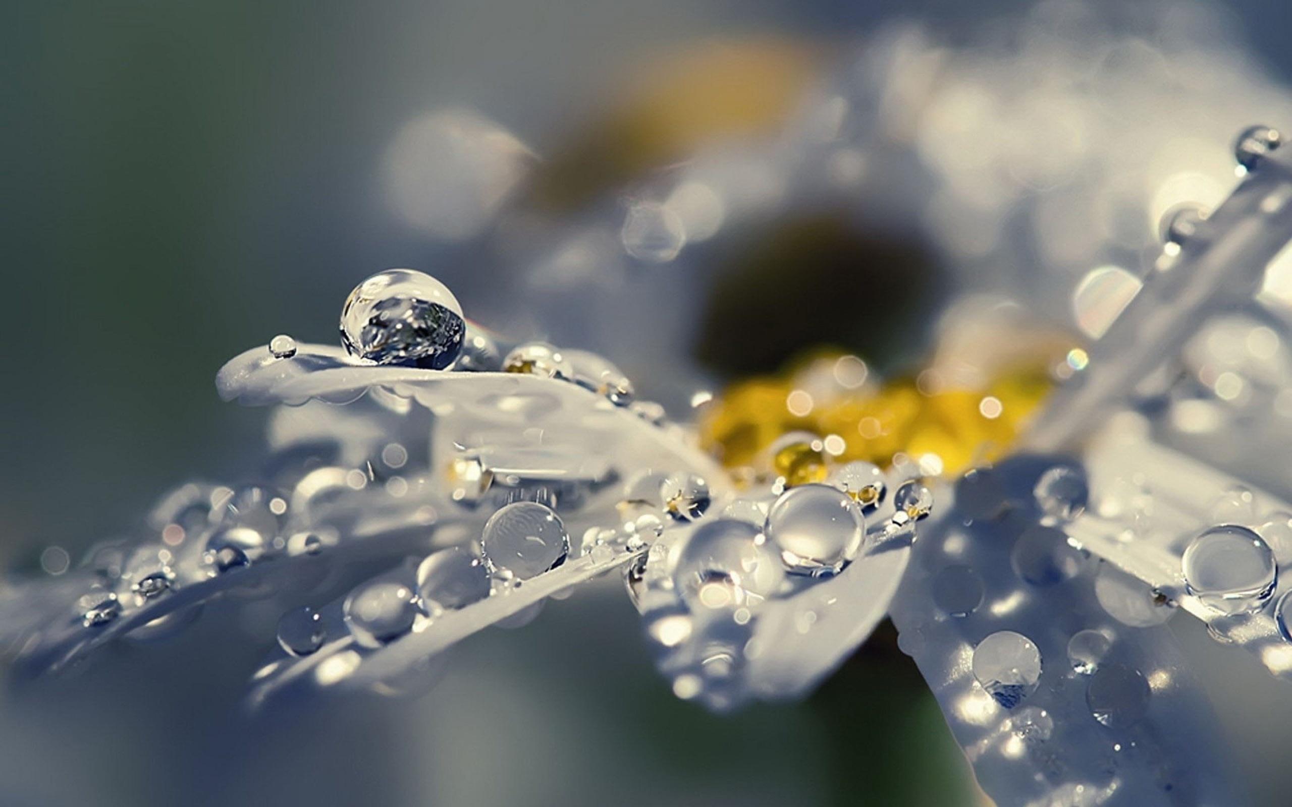 Капля дождя на цветах фото